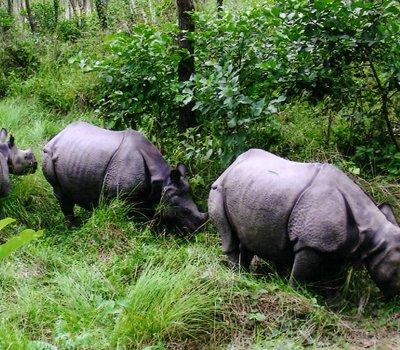 Chitwan Jungle Safari Tour